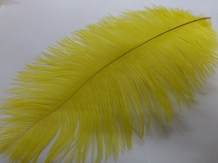 A&M Ostrich Feathers